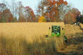 Switchgrass harvest using hay mowing equipment. Photo courtesy of Daniel Ciolkosz.