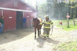 Animals in Barn Fires