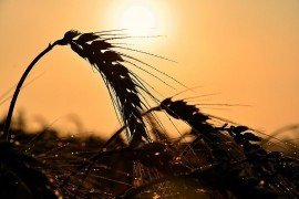 Heat Illness and Agriculture