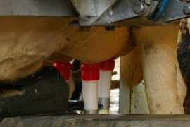 Milk Quality on PA Dairy Farms Using Robotic Milking Systems – Part 2