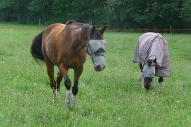 Equine Insect Pests
