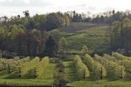 Apple Disease Control Toolbox - Fungicide Timing