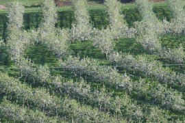 Apple Insect and Mite Control Toolbox - Insecticide and Miticide Efficacy