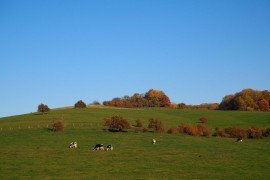 Fall Pasture and Grazing Management