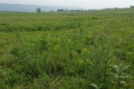 Problem weeds in a pasture setting. (Source: Penn State Extension)