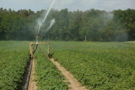 Irrigation for Fruit and Vegetable Production