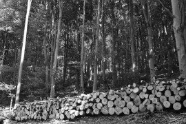 Managing Small Woodlots