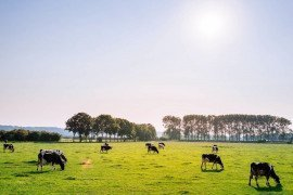 Protein in Pastures: Can It Be Too High?