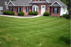 How Much Soil Phosphorus is in Pennsylvania's Lawns?