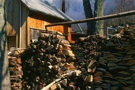 Sugar maple sap is made into maple syrup in a sugarhouse.