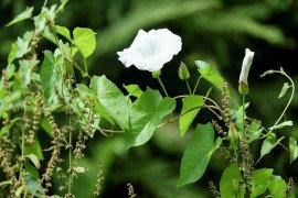 Introduction to Weeds: What are Weeds and Why do we Care?