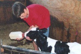 Trouble Shooting Colostrum Management: Colostrum Calculator