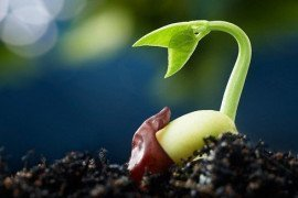 Photo: Seedling, U.S. Department of Agriculture, Flickr.com (CC BY 2.0)
