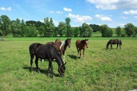 Pasture and Hay for Horses