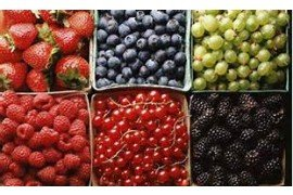 Guide to Farming: Small Fruits