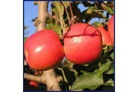 Guide to Farming: Tree Fruits