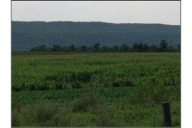 Figure 1. Lodged corn seen from a distance.