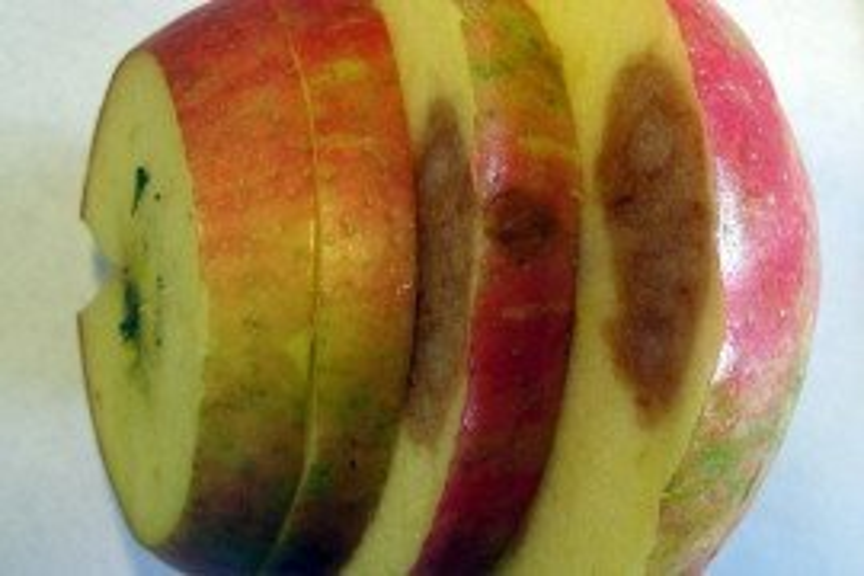 Soggy breakdown on Honeycrisp fruit. Photo courtesy of Yosef Al Shoffe, Cornell