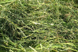 Determining Forage Quality