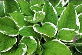 Key Herbaceous Plants and Key Pathogens/Diseases