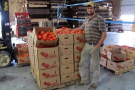 Ephraim by his tomatoes in his storage facility.