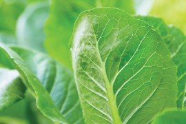 Vegetable IPM with an Emphasis on Biocontrol