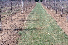 Orchard IPM - Postharvest Management Practices