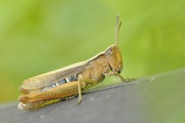 Questions and Answers about Caterpillars and Grasshoppers