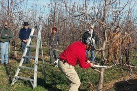 Pruning Safety Tips