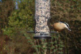 Reducing Disease Risk at Feeders