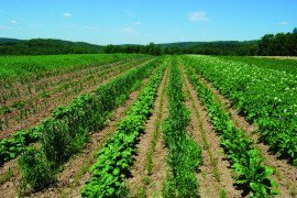 Field of diverse crops in rotation
