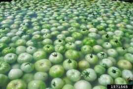 Food Safety Tips for Washing Produce