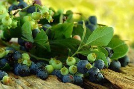 Table 9.3. Pesticides for Blueberries in Home Gardens