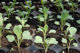 Vegetable Planting and Transplanting Guide