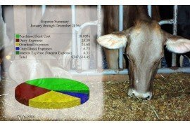 Four Common Dairy Business Oversights Using QuickBooks™