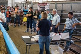 Biosecurity Risk Assessment: Livestock Exhibitions