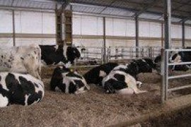 Calf and Heifer Housing