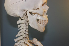 Support Your Bones with Healthy Habits