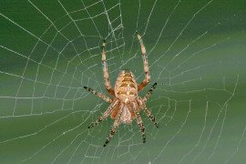 Commonly Encountered Pennsylvania Spiders
