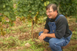 Learning from Your Own Farm: Farmer/Grower Grant Success Stories