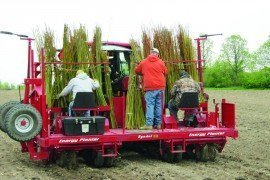 Establishing willow biomass crops by planting one-year-old stems of selected willow cultivars.
