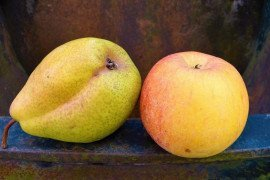 Apples and Pears (Pome Fruit) in the Home Fruit Planting