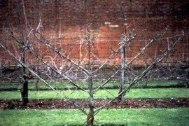 Artistic Culture of Fruit Trees in the Home Landscape