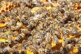 Beekeeping - Honey Bees