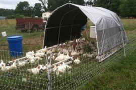 Marketing Poultry Slaughtered Under USDA Exemption