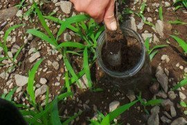 Soil Health: Soil Physical Properties
