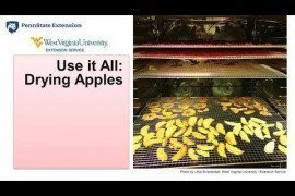 Using it all: Drying Apples