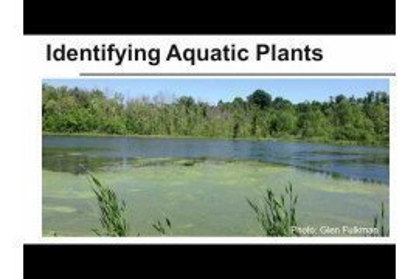 Identifying Aquatic Plants