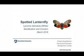 Spotted Lanternfly Identification and Concern