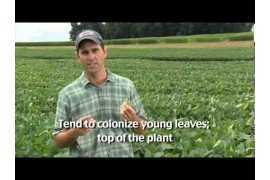 Core Topic Briefs: Soybean Field Pest Walk with John Tooker